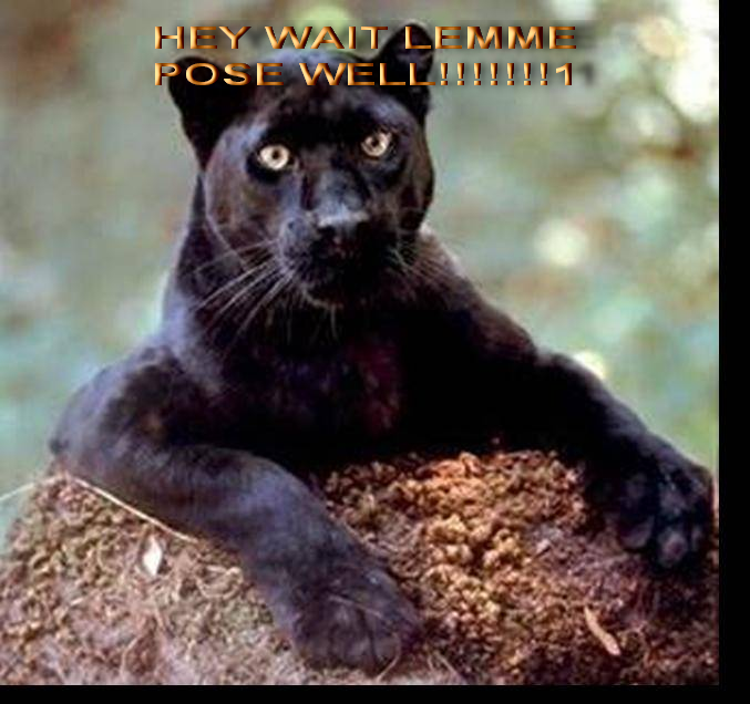 Crna pantera sex profil hr