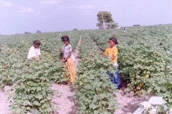 Indien ist das größte Land in Südasien und nach China das bevölkerungsmäßig zweitgrößte Land der Welt. Indien rühmt Der Preis für die Nutzung beträgt Fläche: km².