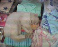熟睡的貓咪