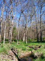 Springtime in the woods of eastern Christian County, Kentucky
