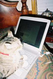 Blogging Queen, Young and Free...