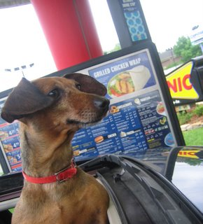 Daphne checks out the Sonic menu