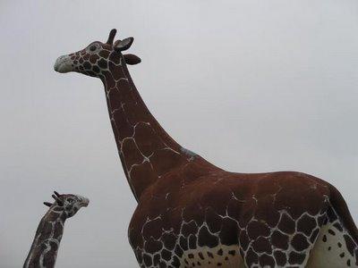 Giraffes at Noah's Ark
