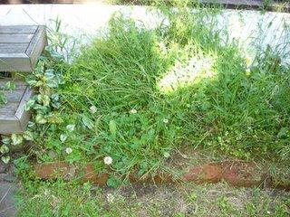 My poor herb garden has been taken over by weeds