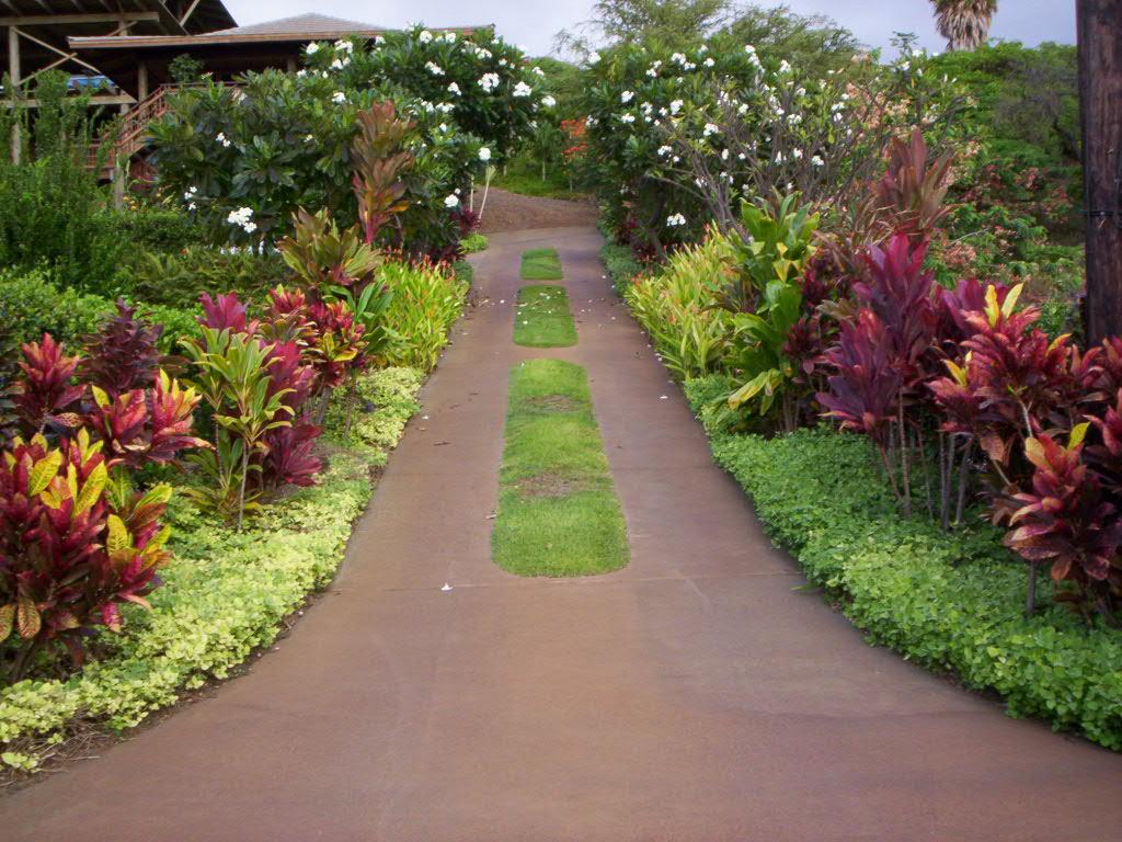 Tropical embellishments the last hurrah for 50ft garden design