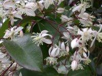 路旁盛開的不知名野花