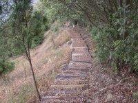 雨社山登頂前的枕木步道