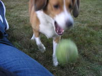 I don't know if you realize this, but I really want you to throw the ball.