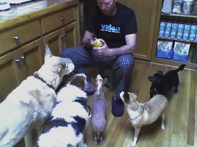 Едят вегетарианские собаки и кошки