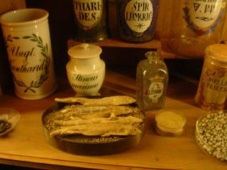 Preserved newts, in the German Pharmacy Museum in Heidelberg castle