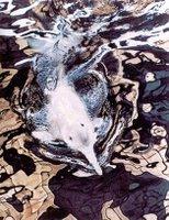 Uno más para la larga lista en peligro, el delfín del río Yangtze