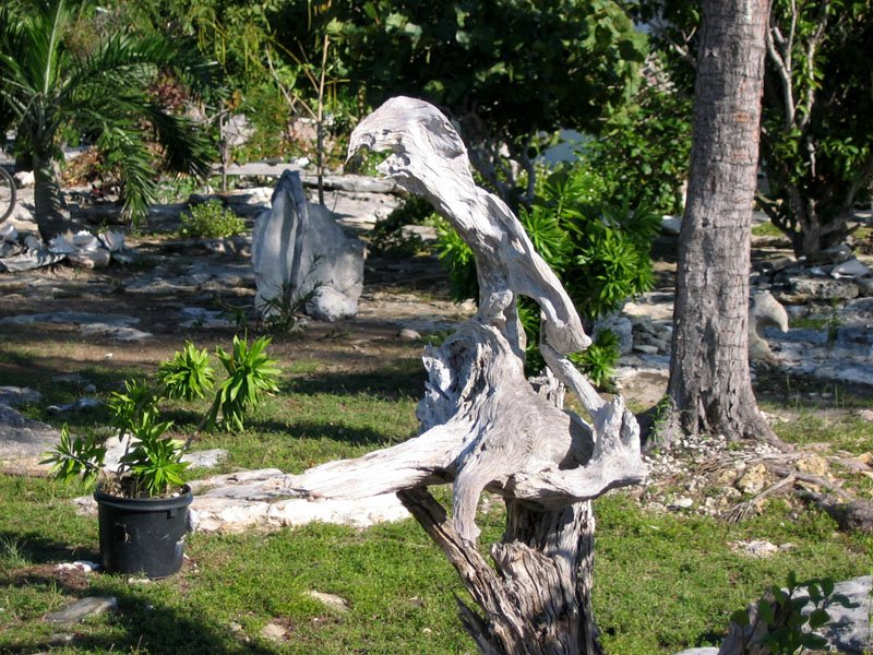Amante february 2006 Driftwood sculptures for garden