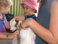 Phoenix and Goat, Darwin Show