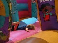Peregrine: Resting - Darwin Show
