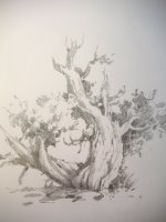 travel sketchbook pencil drawing of Cedar Tree in Capitol Reef National Park