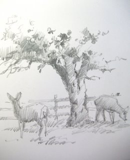 Travel sketchbook pencil drawing of mule deer in the apple orchard at Capitol Reef National Park