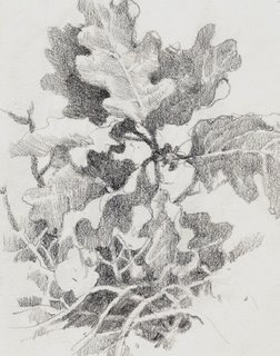 Travel sketchbook drawing of scrub oak near Zion National Park