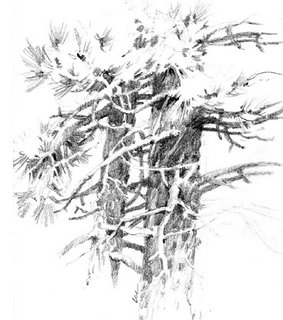 Travel sketchbook drawing of Ponderosa Pine Trees at Zion