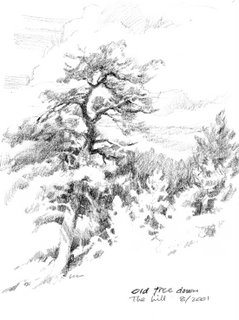 sketchbook drawing of Ponderosa Pines at Zion