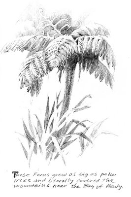 Travel sketchbook drawing of Tree Fern in New Zealand near Opotiki
