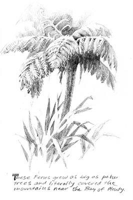 Travel sketchbook drawing of Tree Fern in New Zealand near Opotiki