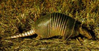 Animales del mundo en peligro de extincion!!