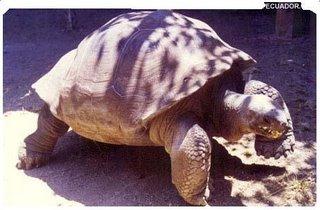 Tortuga Galapagos, unica especie longeva en el planeta.