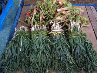 mountain herbs for sale