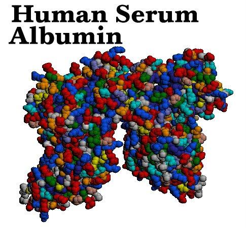 Sex binding protein