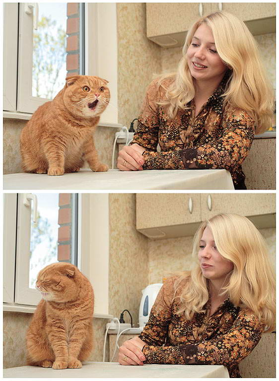 blond pussy cat kitchen funny
