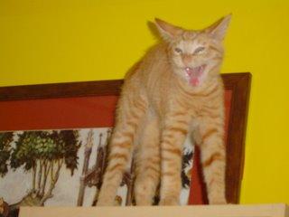 actually, he's yawning