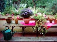 Terrasse im August