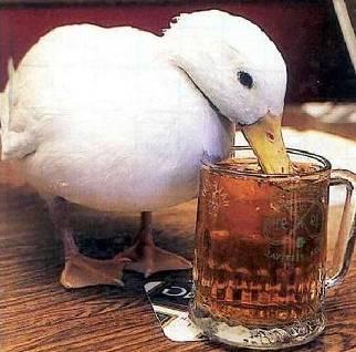Beer Duck