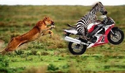 Zebra solution