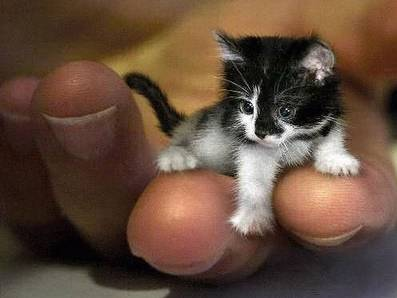 Funny Small Cat