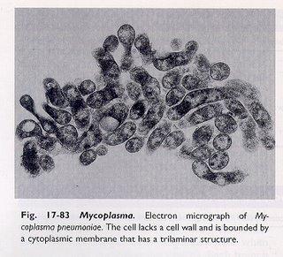 Mycoplasma pneumoniae | Home | CDC