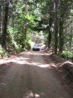 nuestro coche en el bosque