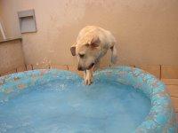 Cass saltando a la piscina