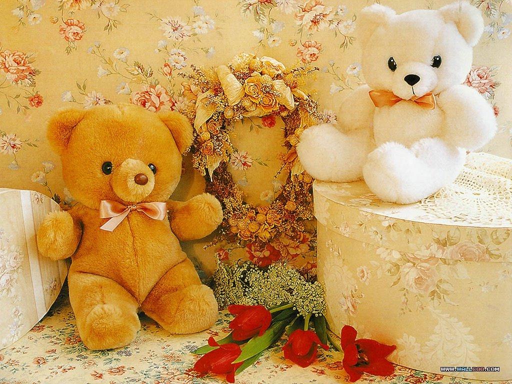 泰迪熊的世界