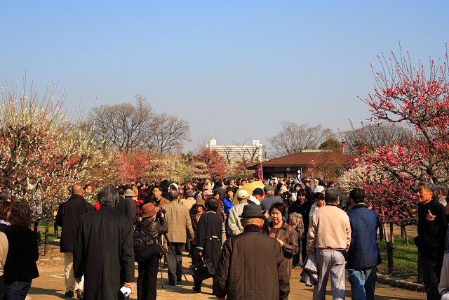 公園 梅林 城 大阪 大阪城公園梅林のアクセス方法(行き方)は?開花時期や見頃はいつ?