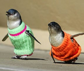 http://photos1.blogger.com/blogger/3460/1092/1600/penguin-sweaters.jpg