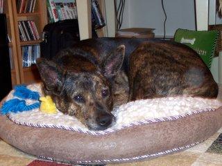 Petsmart Dog Beds Sale