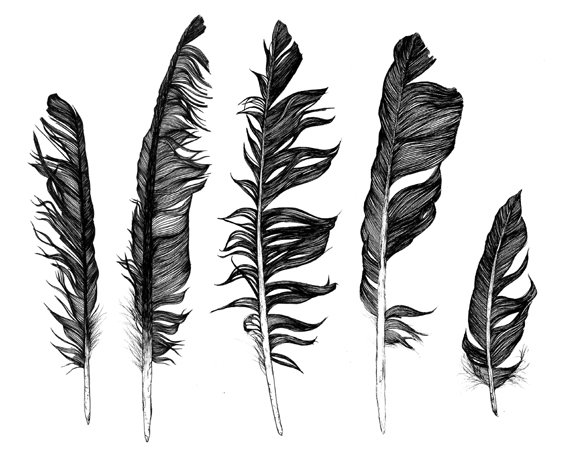 Line Art Feather : The quiet revolution october