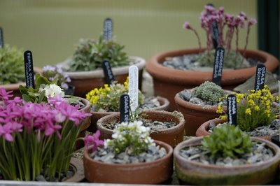 Alpine house plants