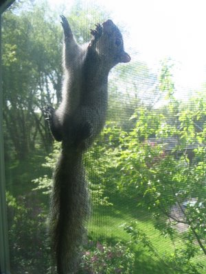 My new squirrel roommate