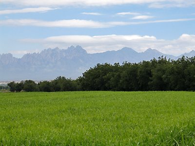 Organ Mountains and Corn