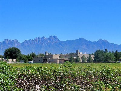 Organ Mountains and Cotton