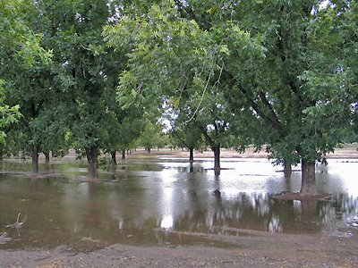 Flood Irrigation of Pecans