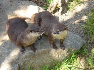 otter zoo