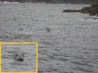 Seals off the coast in Cornwall